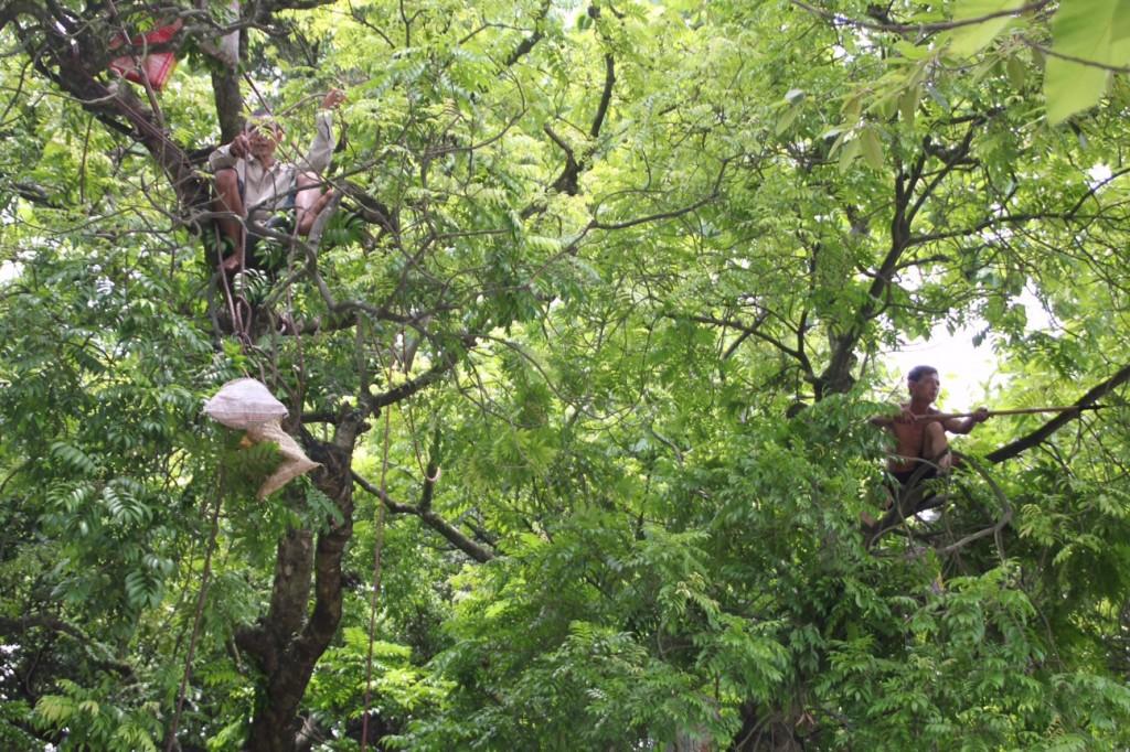 Hoog in de bomen op zoek naar vruchten